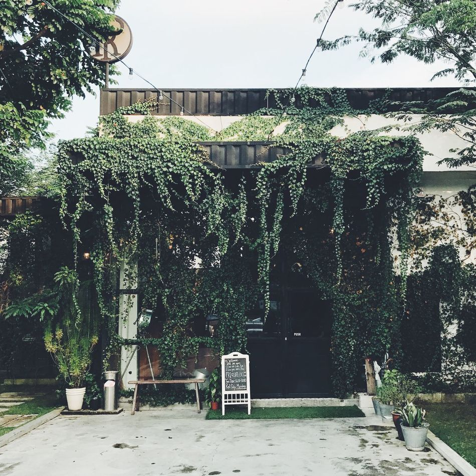 Architecture Building Exterior Court Day Growth Hanging Nature No People Outdoors Sky Tree