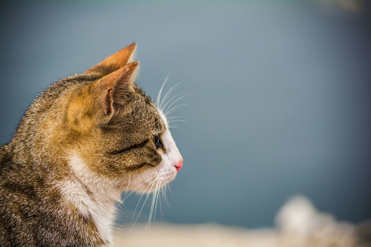Beautiful stock photos of cat, Animal Head, Day, Domestic Cat, Focus On Foreground
