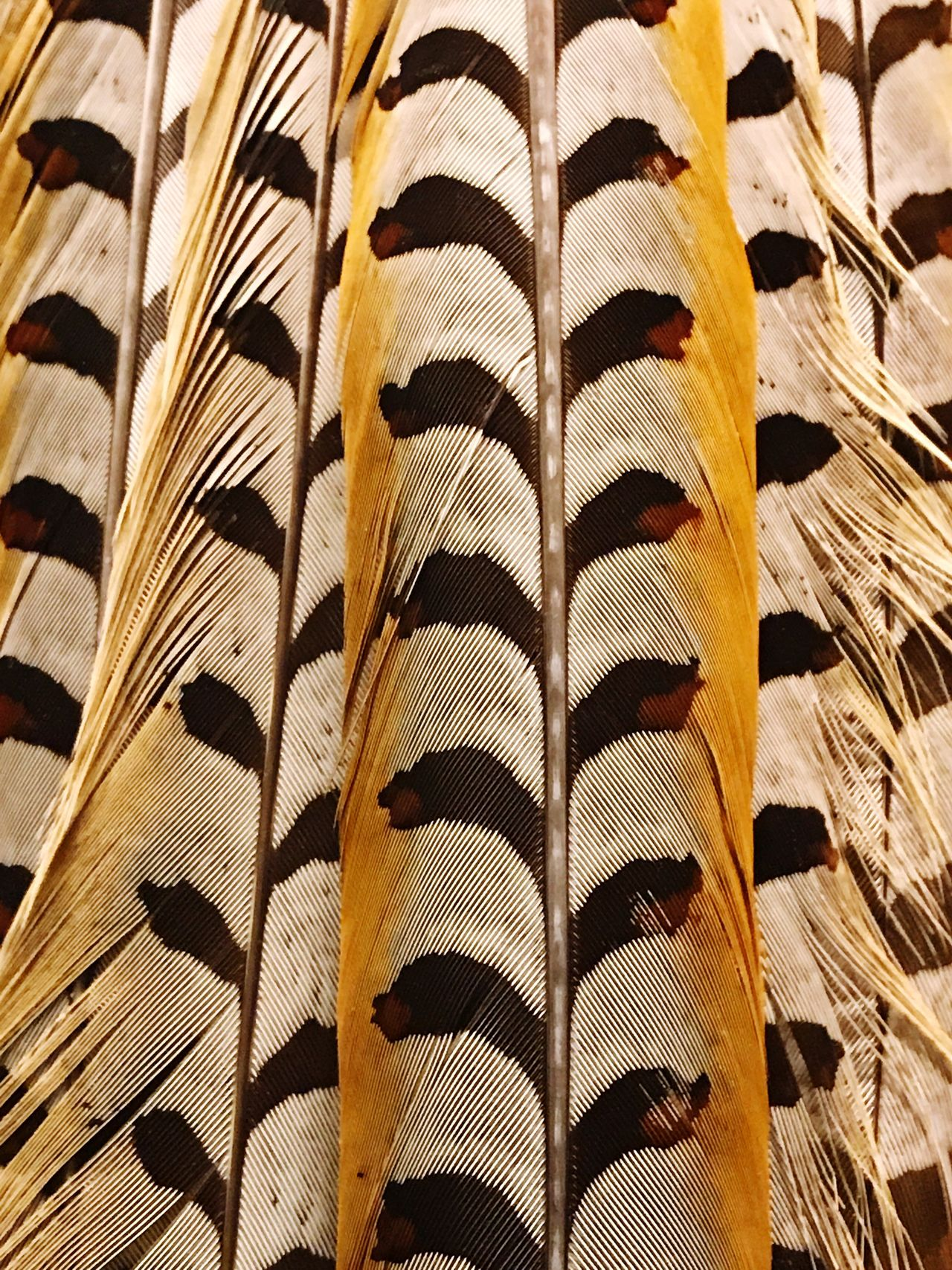 Full Frame Backgrounds Textile Pattern No People Close-up Multi Colored Indoors  Nature Day Mammal