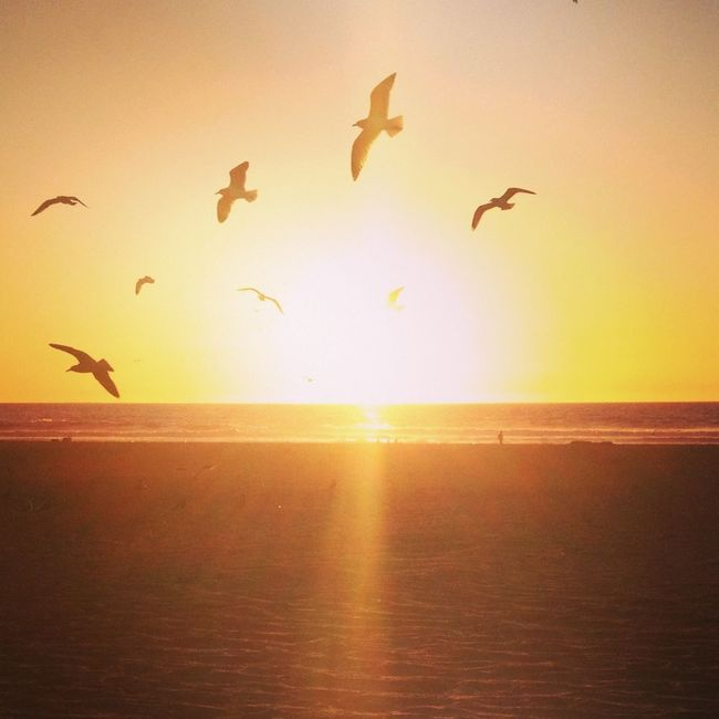west coast happy place Ocean Pacific Ocean Sunset Birds