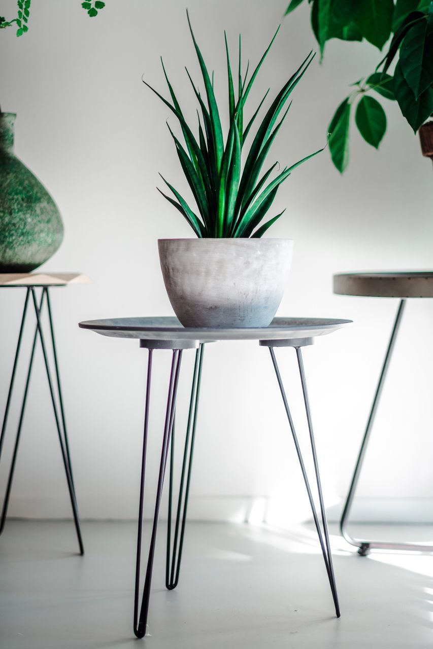 indoors, table, no people, chair, home interior, growth, plant, close-up, day