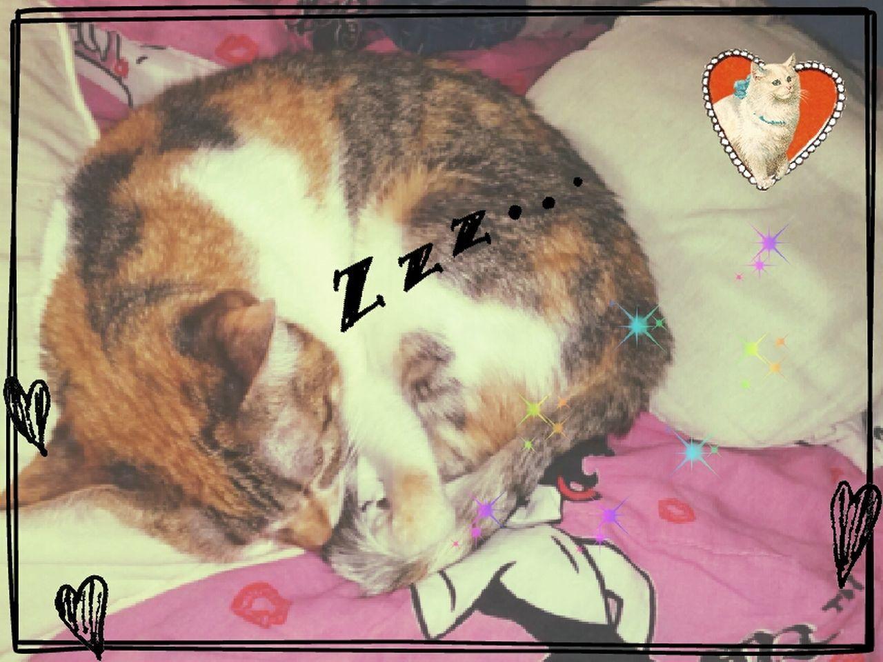 Só sabe dormir! Sleeping Pet