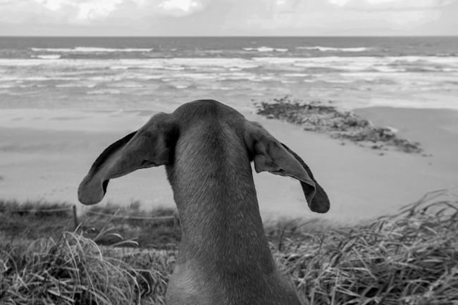 I can fly Art Photography Beauty In Nature Blackandwhite Photography Candid Photography Dog On Beach Dogs By The Sea Majestic Nature Non-urban Scene Outdoors Remote Scenics Sea Side View Tourism Tranquility Water Zoology