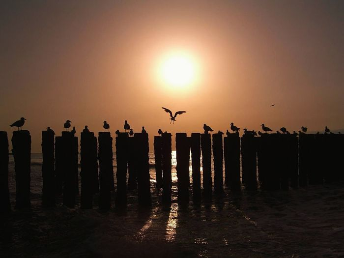 Sonnenaufgang am Strand. EyeEmNewHere Animal Wildlife Silhouette Sunset Bird Animals In The Wild Animal Themes Animal Water Landscape No People Flying Large Group Of Animals Sea Sky Outdoors Nature
