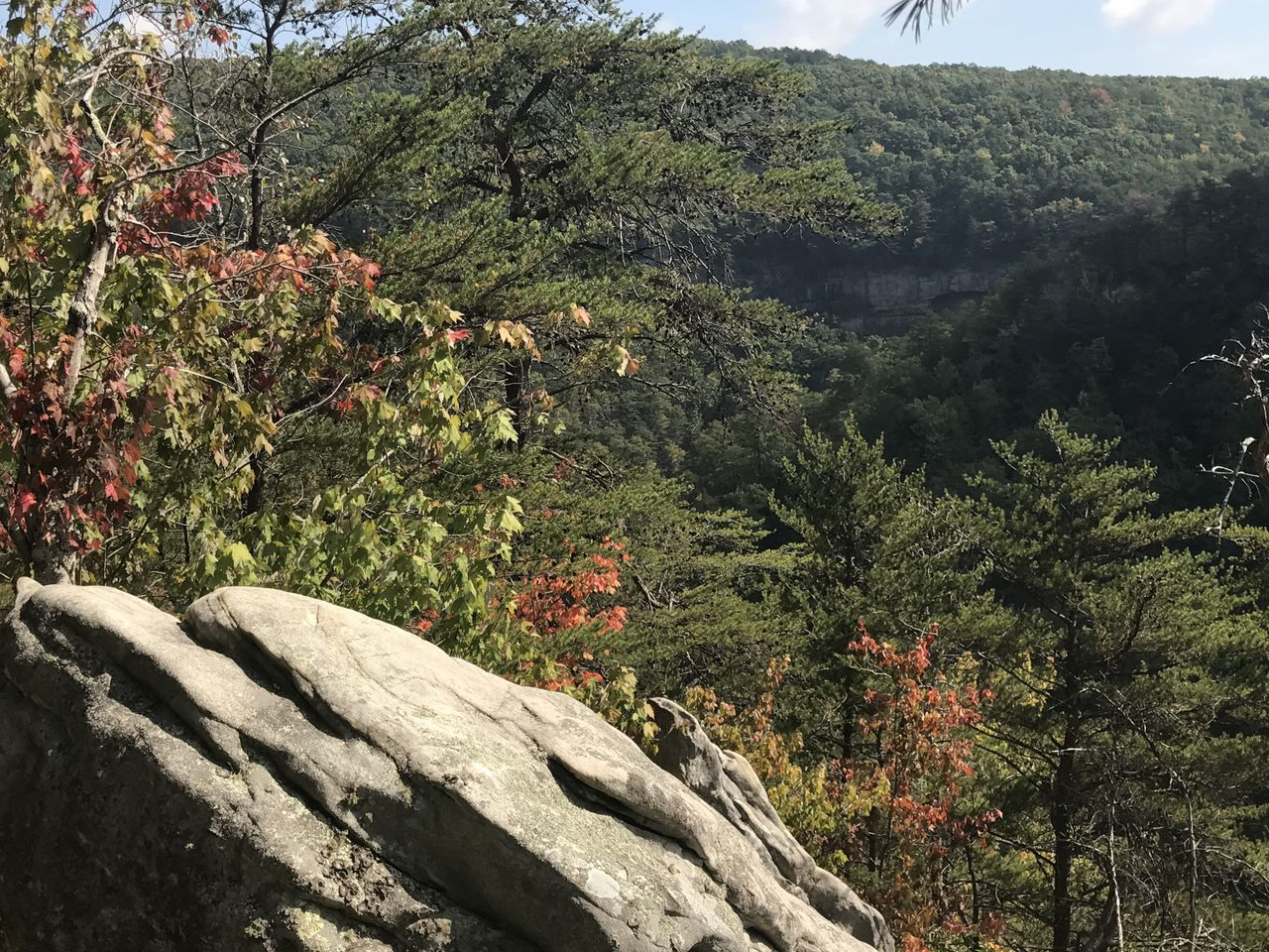 Beauty In Nature Cloudland Canyon Day Fall Freshness Green Color Growth Lush Foliage Majestic Mountain Nature No People Non-urban Scene Outdoors Remote Rock Rock Formation Rocky Mountains Scenics Solitude Tranquil Scene Tranquility Tree Valley