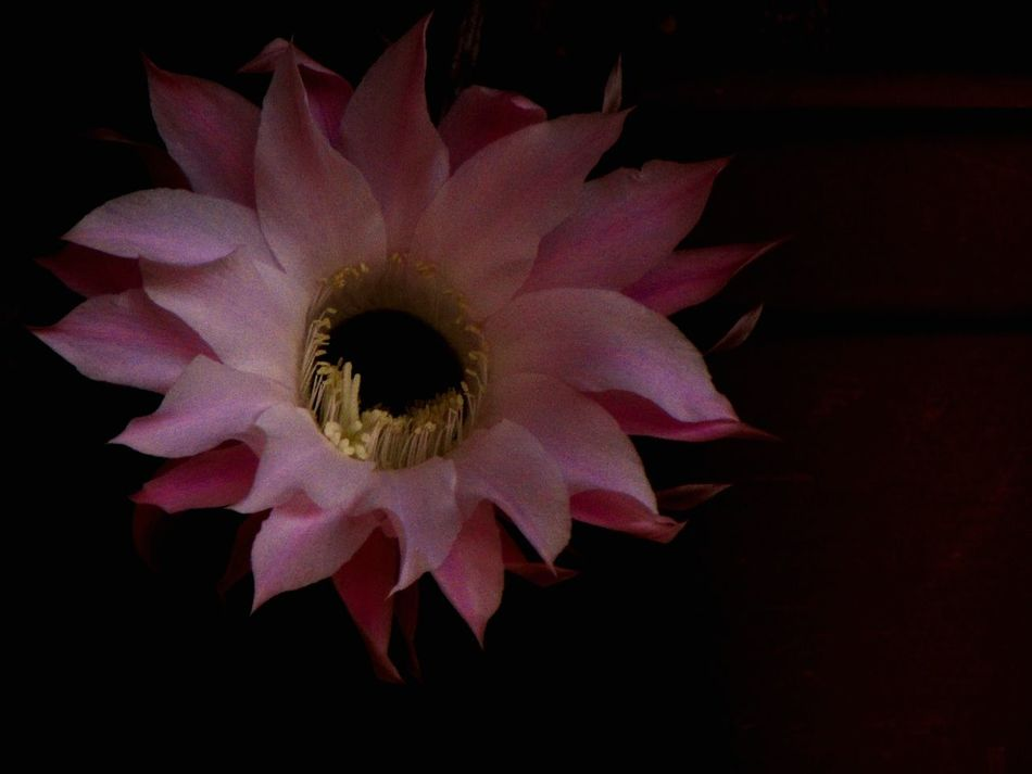 Check This Out Despeinada Flores Flowers Cactus Cactus Flower Cactusporn Vivid Canonsx510