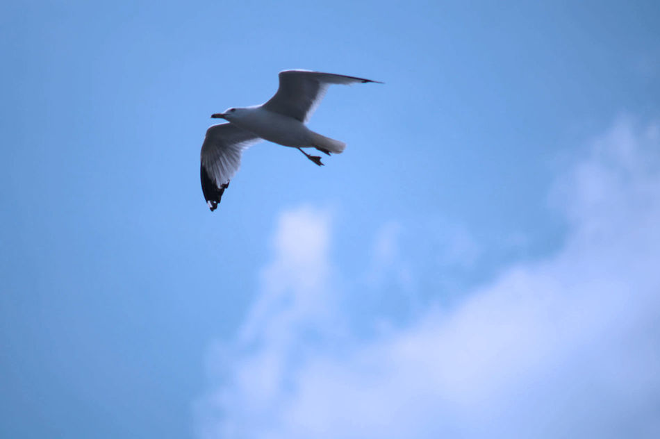 Beautiful stock photos of wings, Animal Themes, Animals In The Wild, Bird, Blue