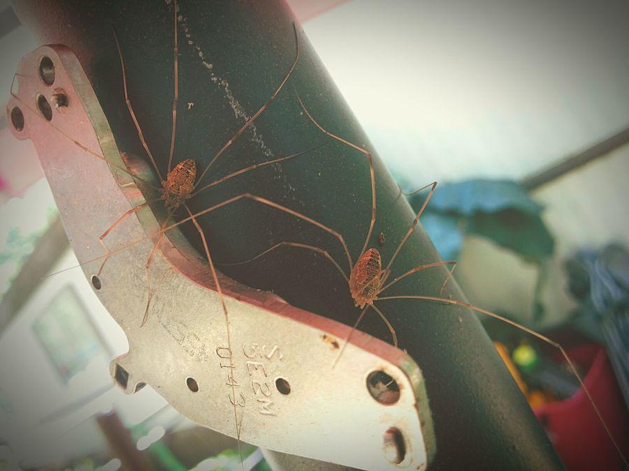 Itsybitsyspider Spider Spiders Spidersofinstagram Spider Nature_collection Eyenaturelover EyeEm Nature Lover EyeEm Gallery Eyeem Spider Photography EyeEm Spiders