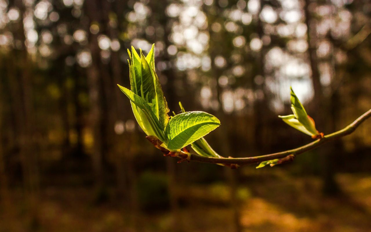 Beautiful stock photos of macro, , Branch, Day, Focus On Foreground