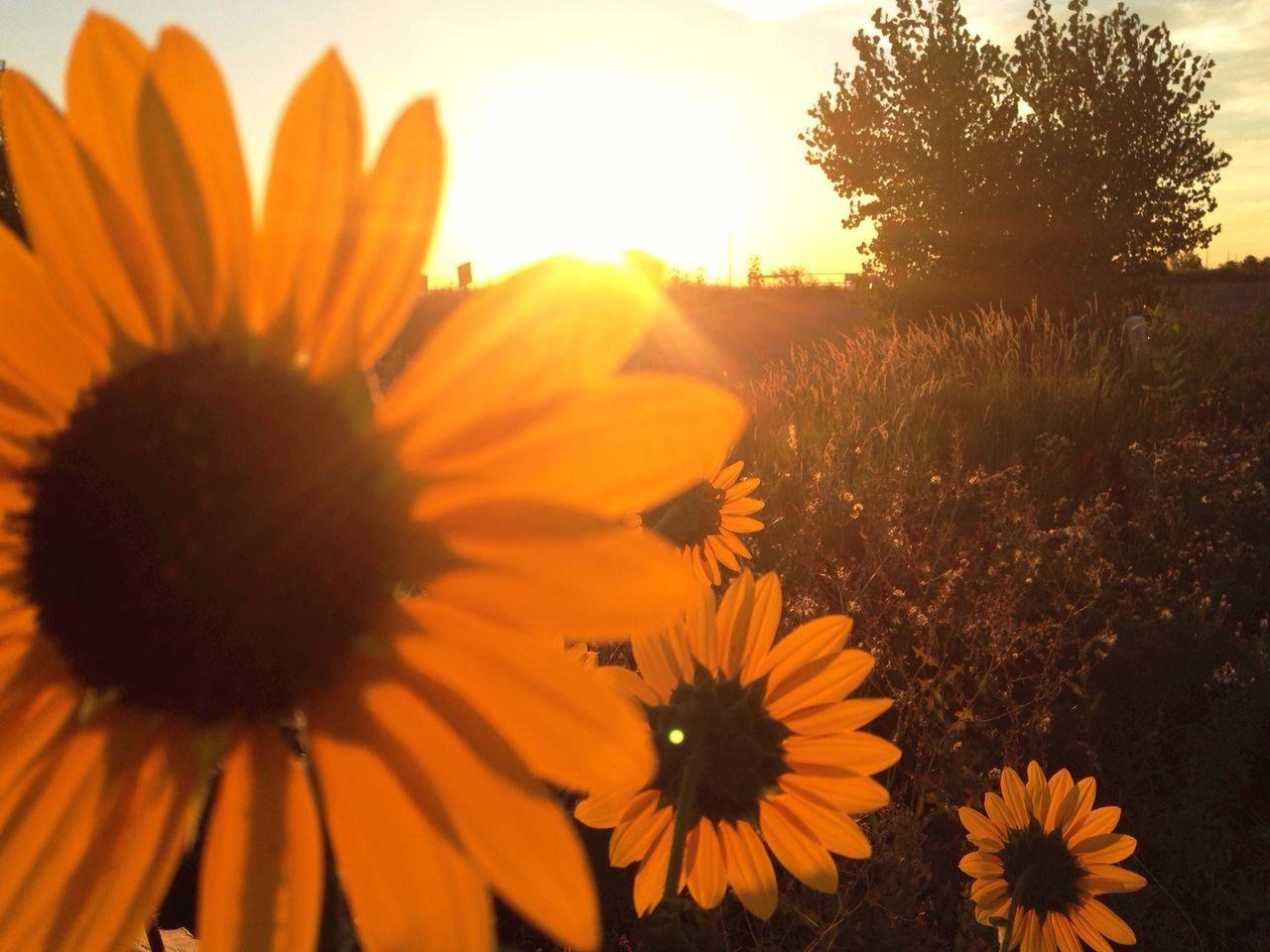 Taking Photoss Good Morning! Sun Rise