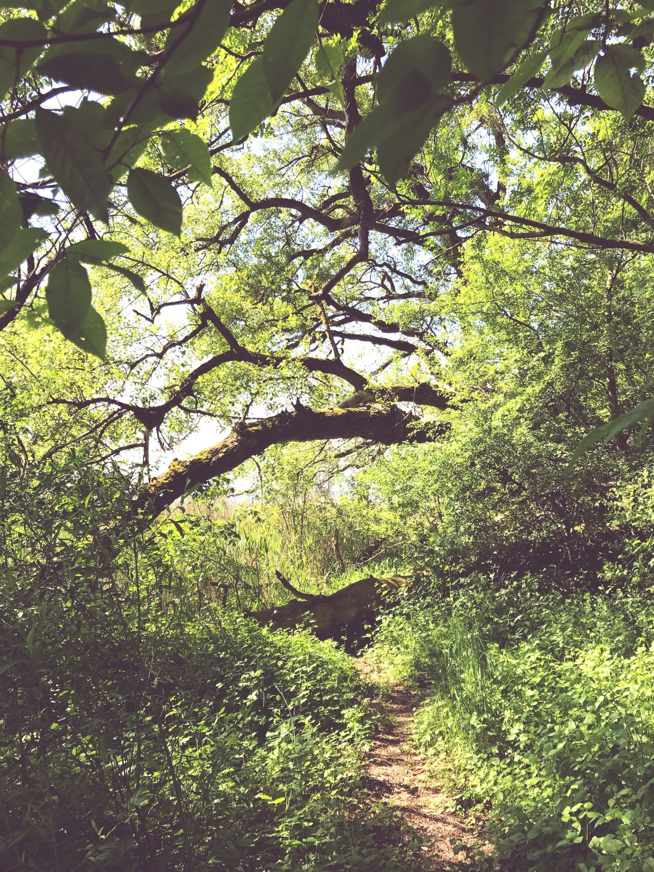 Tree Growth Nature Day No People Branch Tranquility Outdoors Forest Beauty In Nature