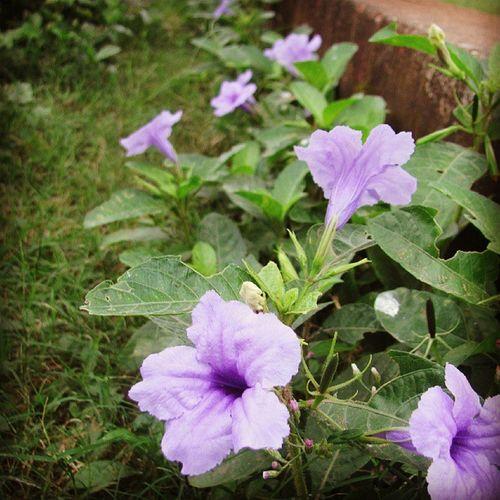 Flower Garden JoggersPark Instawalkbandra2 Mumbai_igers Mumbailife Folloeme Folloeforfollow Likeforlikes Likes Me Fav Mumbai_mumbaikar
