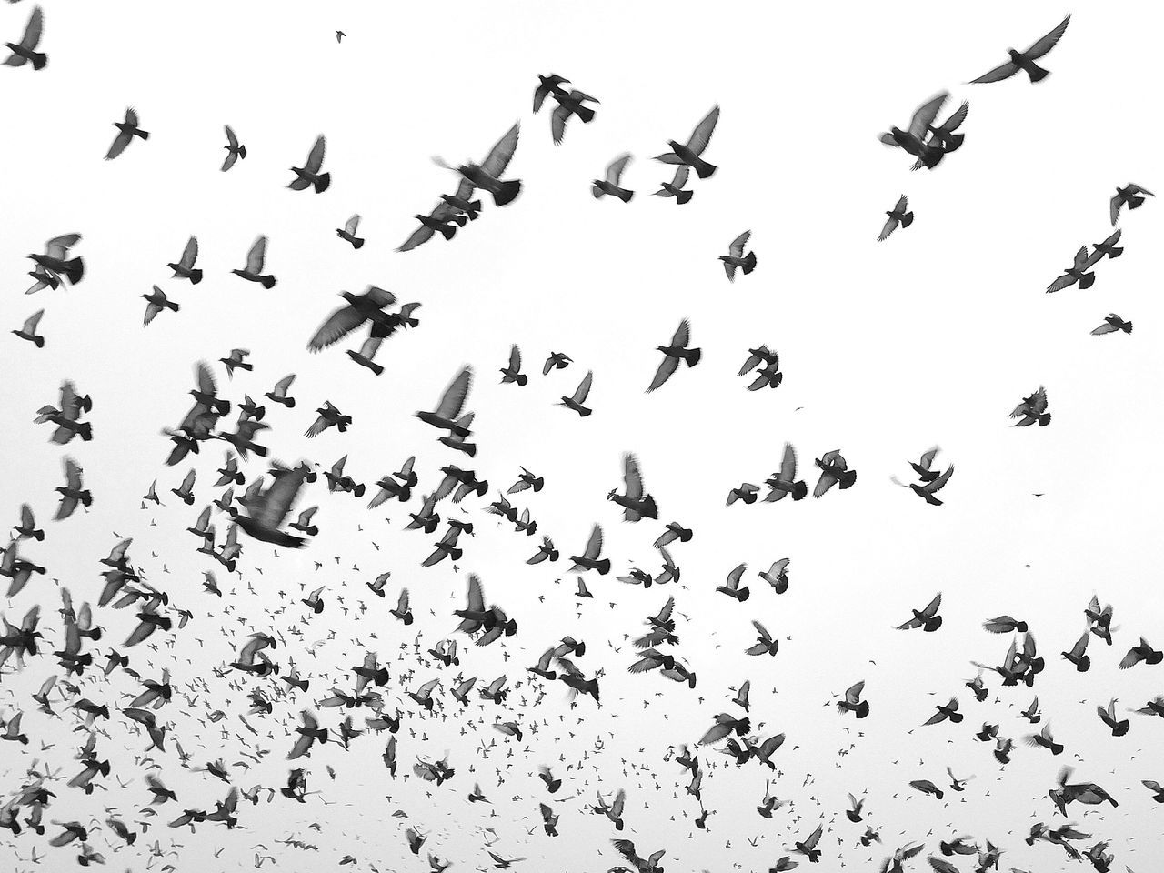 Flock Of Birds Bird Animals In The Wild Animal Themes Flying Day Outdoors No People Nature Eyeemphotography Oneplusphotography EyeEm Gallery India Snapseed Tranquility Tranquil Scene Oneplus2 Blackandwhite Beach Life EyeEm BlackandWhite Edited