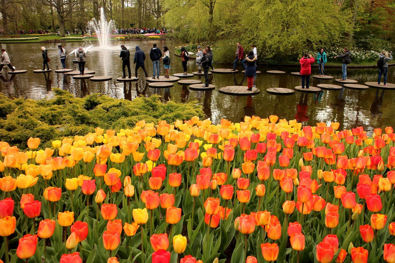 flower, nature, growth, beauty in nature, water, orange color, outdoors, fragility, freshness, day, large group of people, plant, park - man made space, petal, real people, blooming, flowerbed, tree, flower head, competition, grass, people, adult