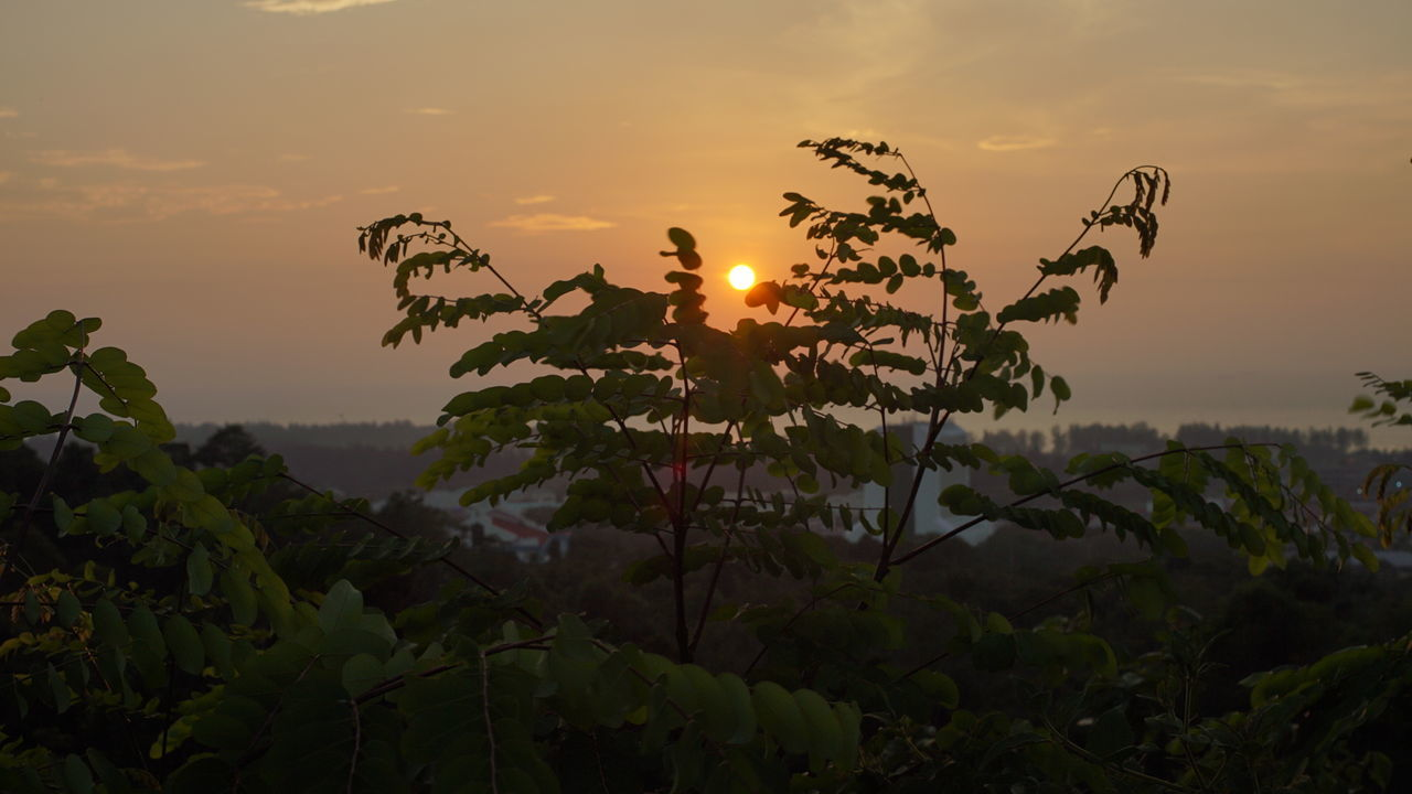Sunset Landscape Tree Travel Arrival Igniting Horizontal Nature Plant Grass Tourism Forest Beauty Outdoors Fog Natural Parkland Water Sky No People First Eyeem Photo Sony Rx10ii The Great Outdoors - 2016 EyeEm Awards No Edit/no Filter Sarawak Middle Of The Road