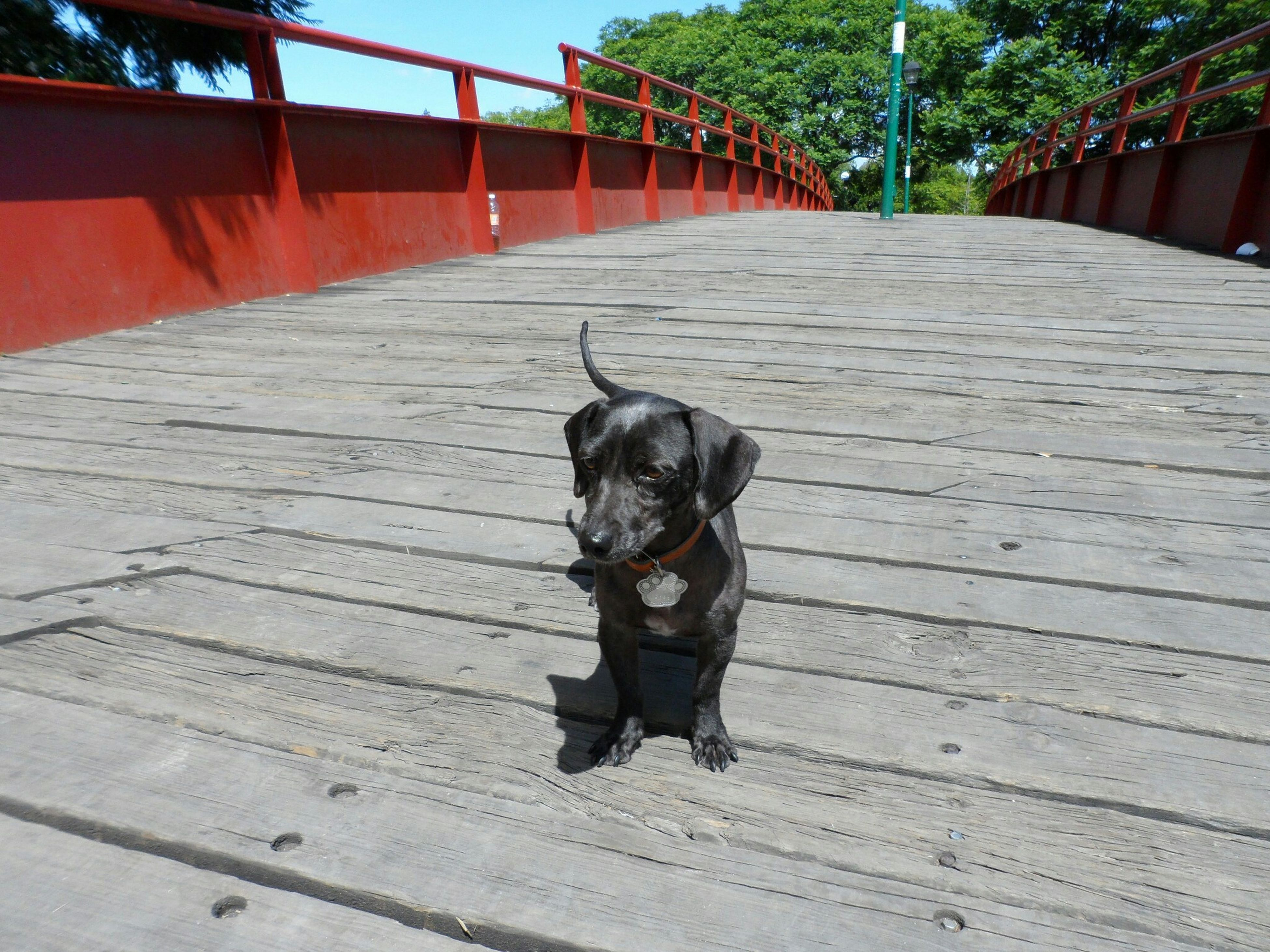 pets, domestic animals, one animal, animal themes, mammal, dog, looking at camera, sitting, wood - material, portrait, relaxation, full length, steps, high angle view, domestic cat, boardwalk, built structure, railing, sunlight, no people
