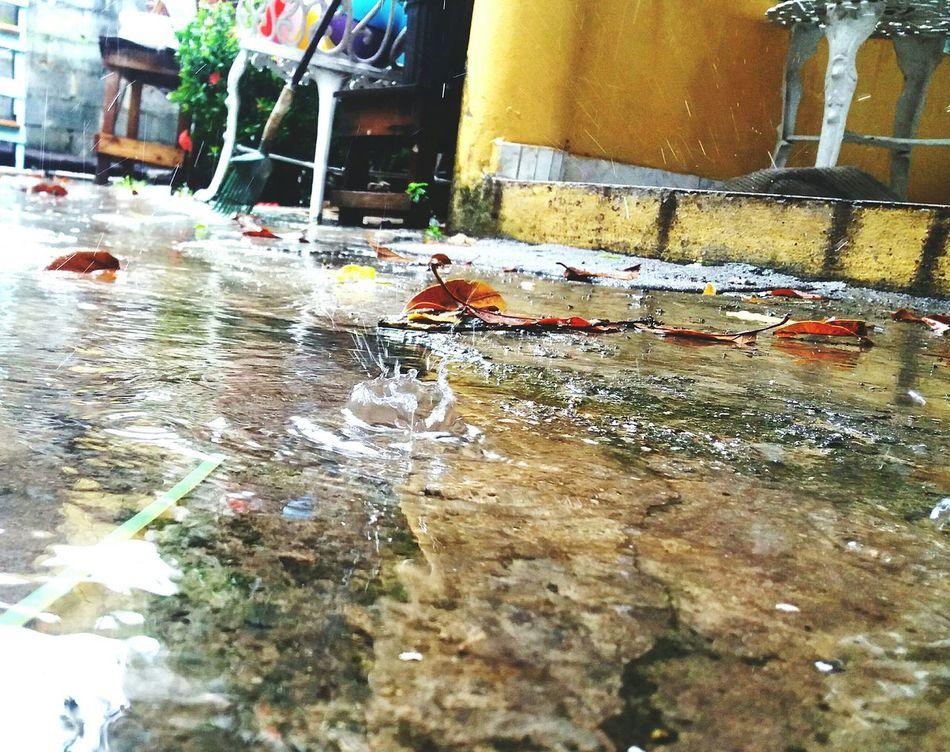 Confortable, fresco, nostalgico y hasta medio melancólico... así siento los días de lluvia. Water Nature Day