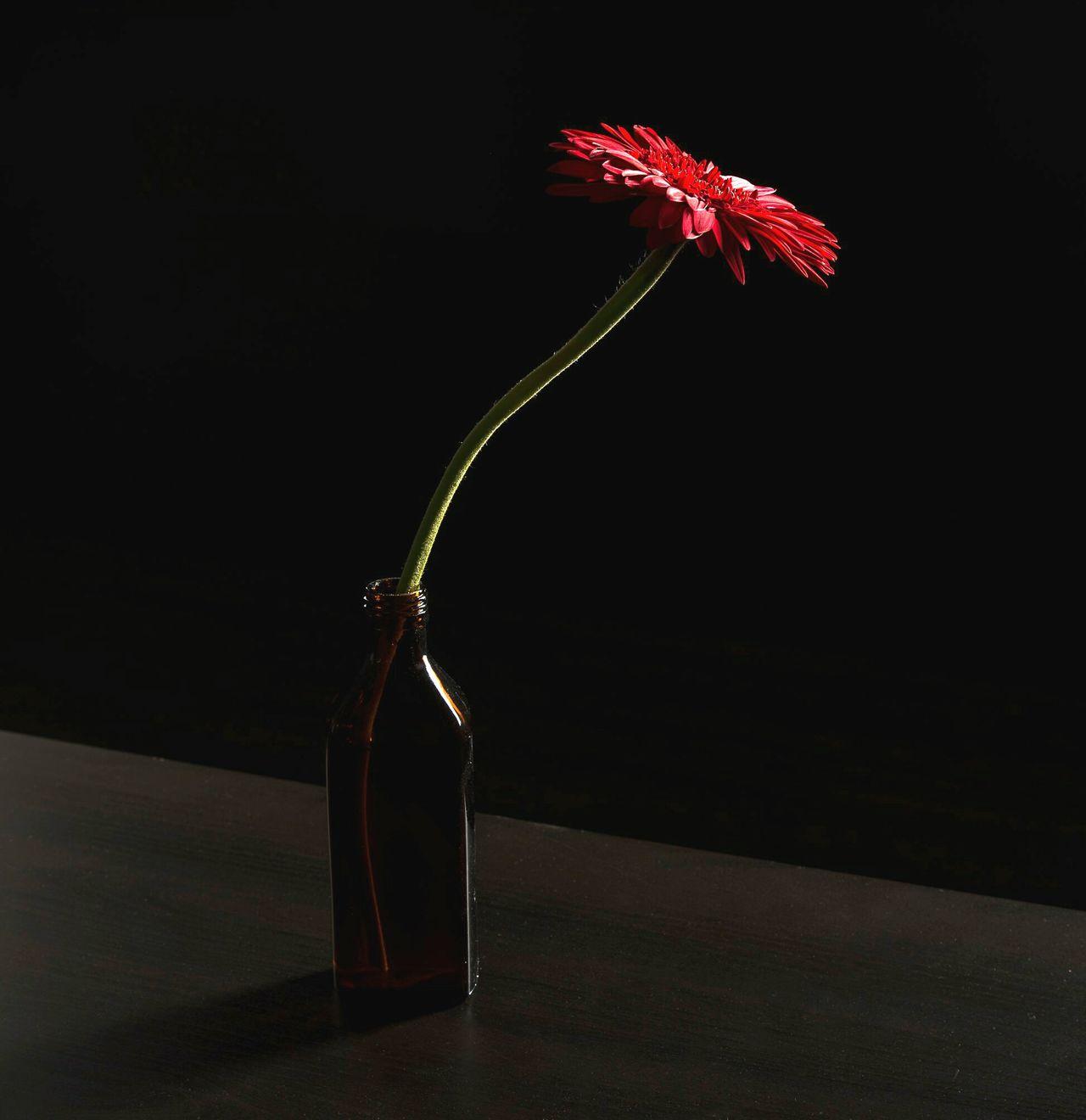 Однажды один мудрый человек промолчал Concert Concept No People Flower Besteyeem 35mm Nikon D750 краснодар EyeEm Russian Team цветок  Conceptual Photography