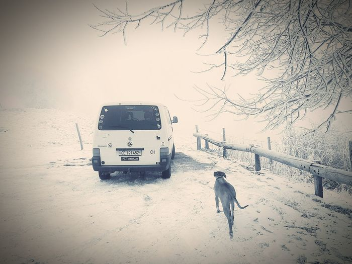 VW Vw Camper Van VW Bus Vwtransporter Vwt4 Vwt4roadtrip Vwcampervan Snow Snow ❄ Rhodesian Ridgeback Dog Dog Traveller Snowing Snow Dog Travel Travel Photography