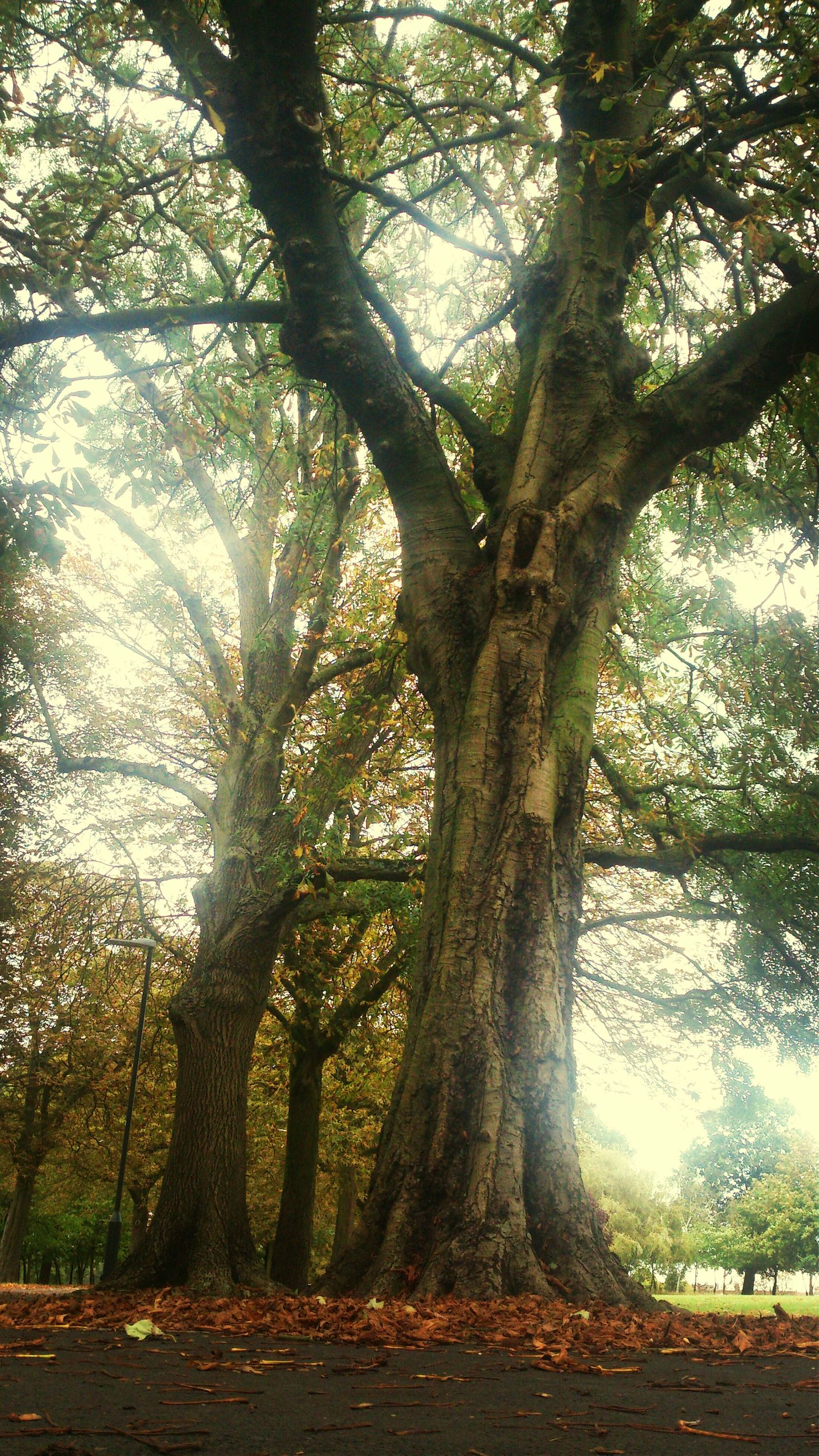 tree, tree trunk, growth, branch, tranquility, nature, tranquil scene, park - man made space, beauty in nature, scenics, day, shadow, sunlight, forest, outdoors, no people, park, sky, low angle view, non-urban scene