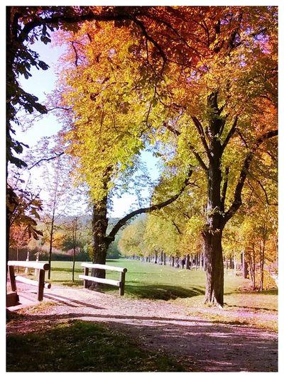 EyeEm Best Shots - Autumn / Fall
