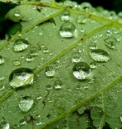 Water Droplets Raindrops Droplets Abstract Leaf Green Nofilter