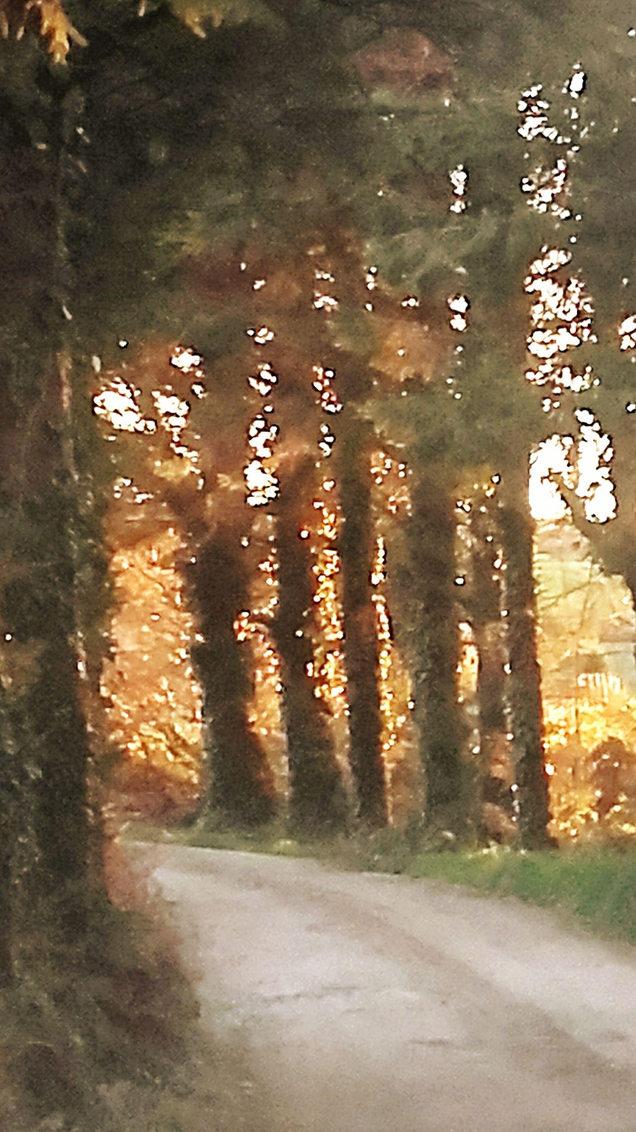 Sunset like fire....🌇 Nature Autumn Colors West Cork Nature Photography Unique Beauty Unique Moments Colorful Eye4photography  Sunset Sunset✨trees✨