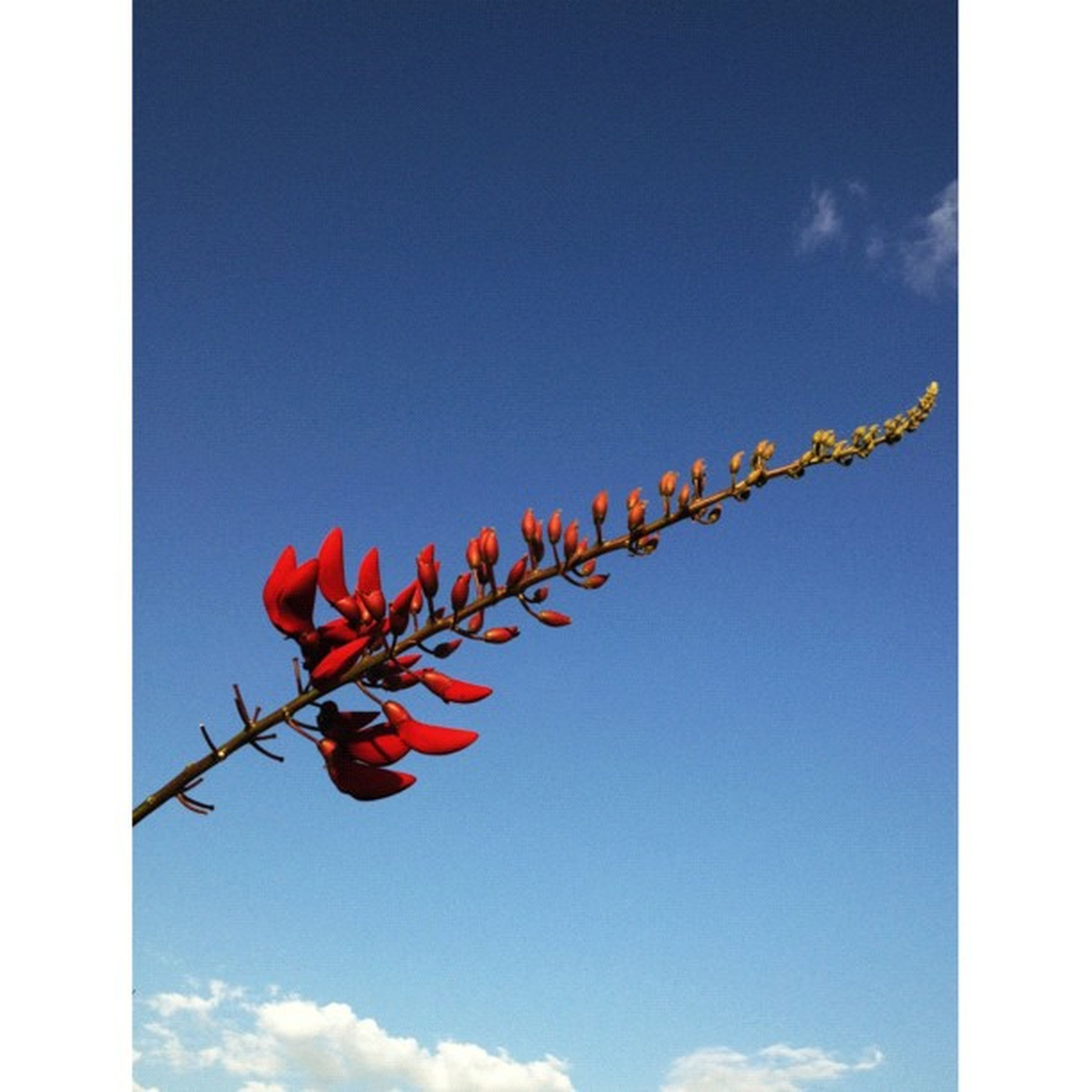low angle view, blue, sky, hanging, clear sky, flower, auto post production filter, no people, copy space, nature, red, outdoors, day, transfer print, decoration, multi colored, growth, pole, close-up, string