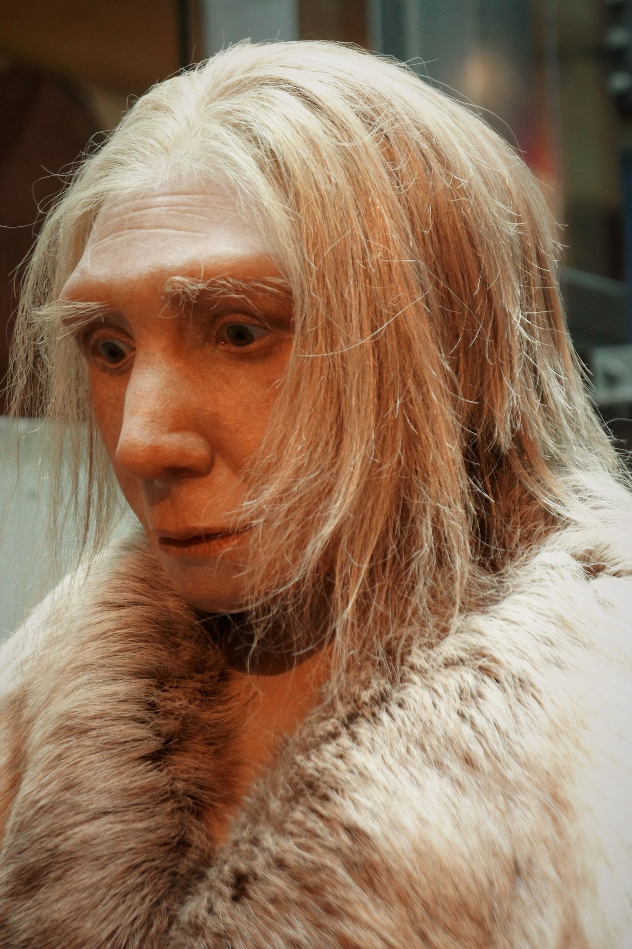 Neandertal Museum Ancient Civilization Animal Themes Close-up Day Early European People Indoors  Neandertaler One Person Portrait Portrait Of A Woman WomeninBusiness