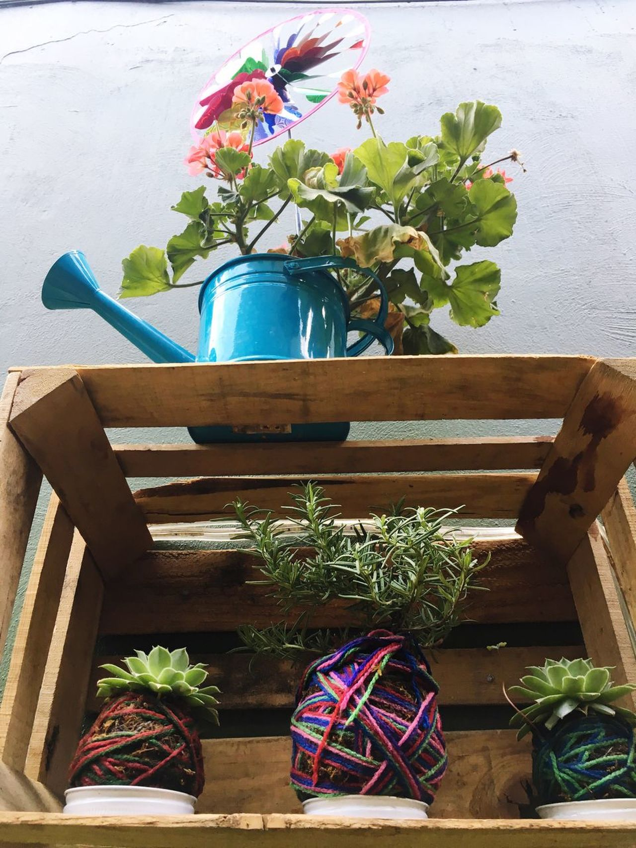 Potted Plant Flower Plant Growth Wood - Material Nature Leaf Table Beauty In Nature No People Day Outdoors Multi Colored Fragility Freshness Flower Head Close-up Florist IPhone Disfrutando De La Vida Rehilete