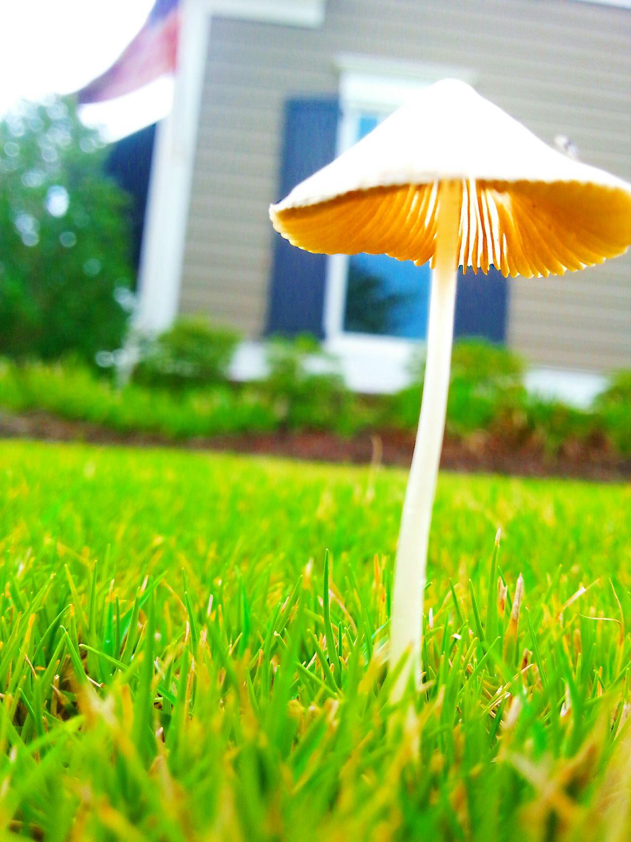 Mushroomphotography Mushrooms Shrooms Non-urban Scene No People Extreme Close Up Shroom Fungus 🍄 Fungi Magic Forest Mushrooms