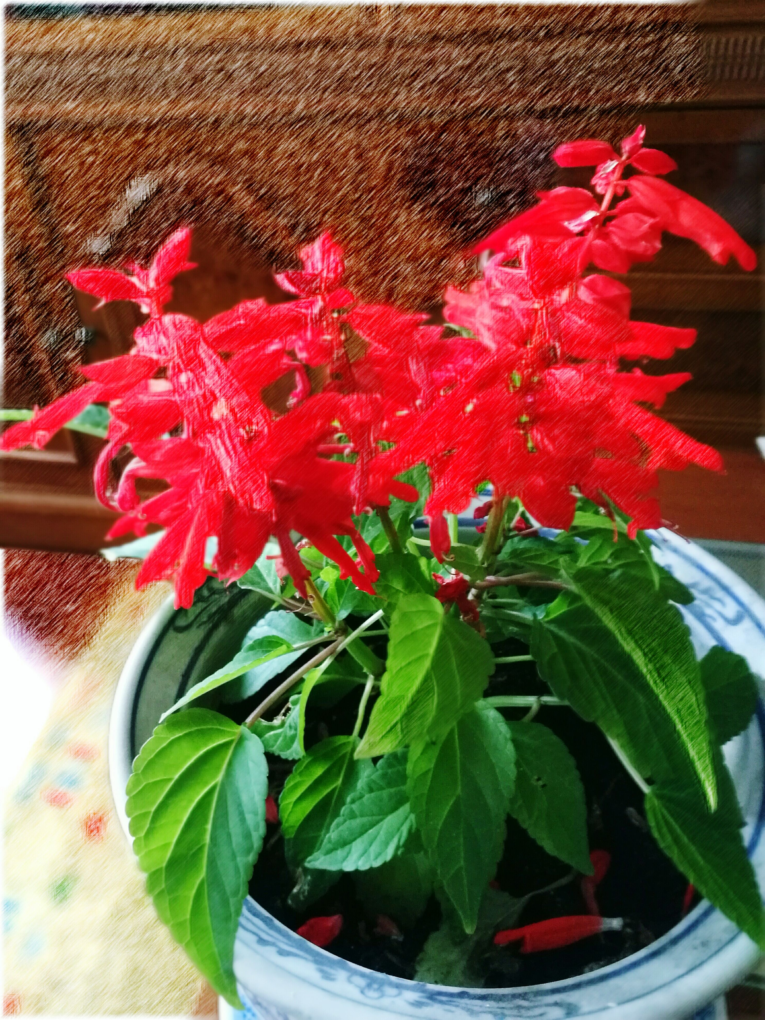 flower, freshness, fragility, petal, plant, red, growth, potted plant, flower head, leaf, beauty in nature, close-up, nature, indoors, flower pot, bouquet, vase, blooming, auto post production filter, high angle view