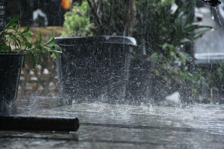 Rainy Days RainDrop Frezzing Raining Pot Plant Street The Week On Eyem EyeEmNewHere