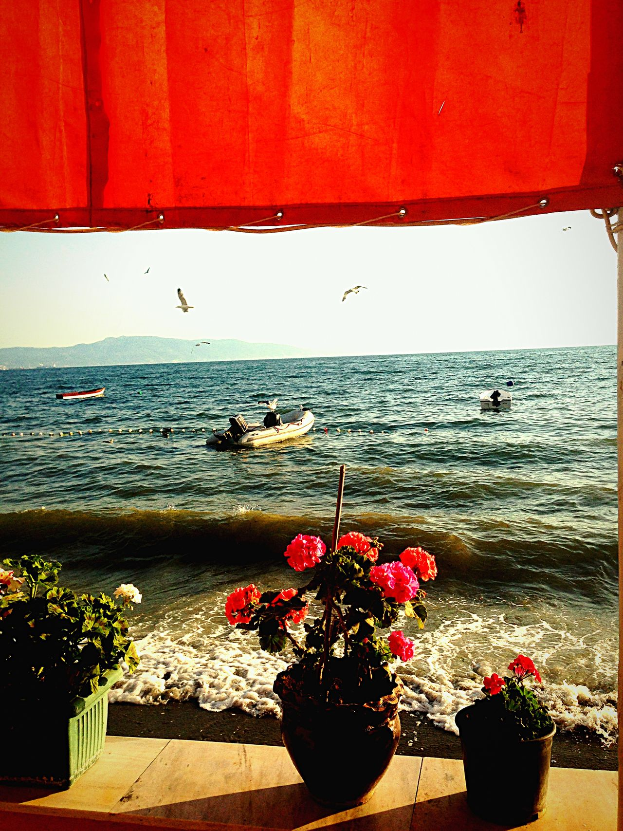 Enjoying The Sun Sea Relaxing Weekend Hello World Enjoying Life Beautiful Day Marmarasea Flowers