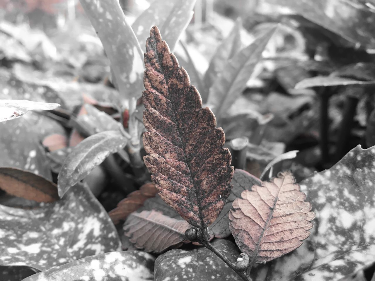 Outdoors Tree Leaf Nature Close-up Winter No People Day Snow Cold Temperature Frozen Growth Beauty In Nature Dried Plant Fragility