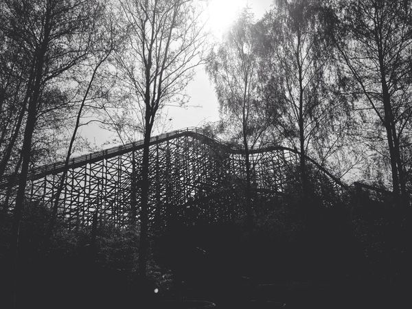 Roller Coaster Trees Hanging Out Blackandwhite