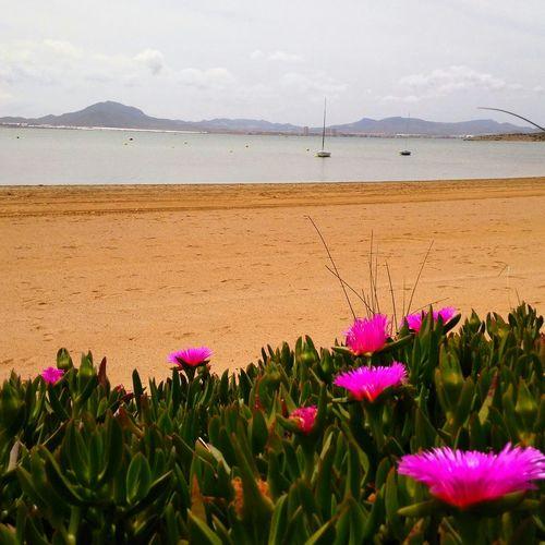 Beautiful World Pictureoftheday Beachphotography Beach Flowers Playa Relaxing Enjoying The Sun Sea La Manga...Cartagena..