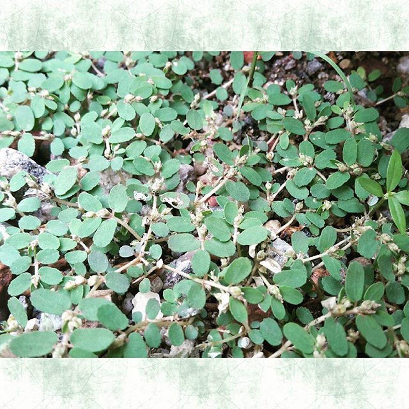 有些事想不通,就不去想; 有些人猜不透,就不去猜; 有些理悟不透,就不去悟; 有些路走不通,就不去走。 活着的核心是健康快乐, 健康是身和心的叠加, 心健才能身健,身健必须心健。 人生 人生百態 人生之道 人生 綠色 自然 分享 lovelife nature life green leaf hope love positive quote picture potd pictureoftheday thinking myself malaysia throwback colour