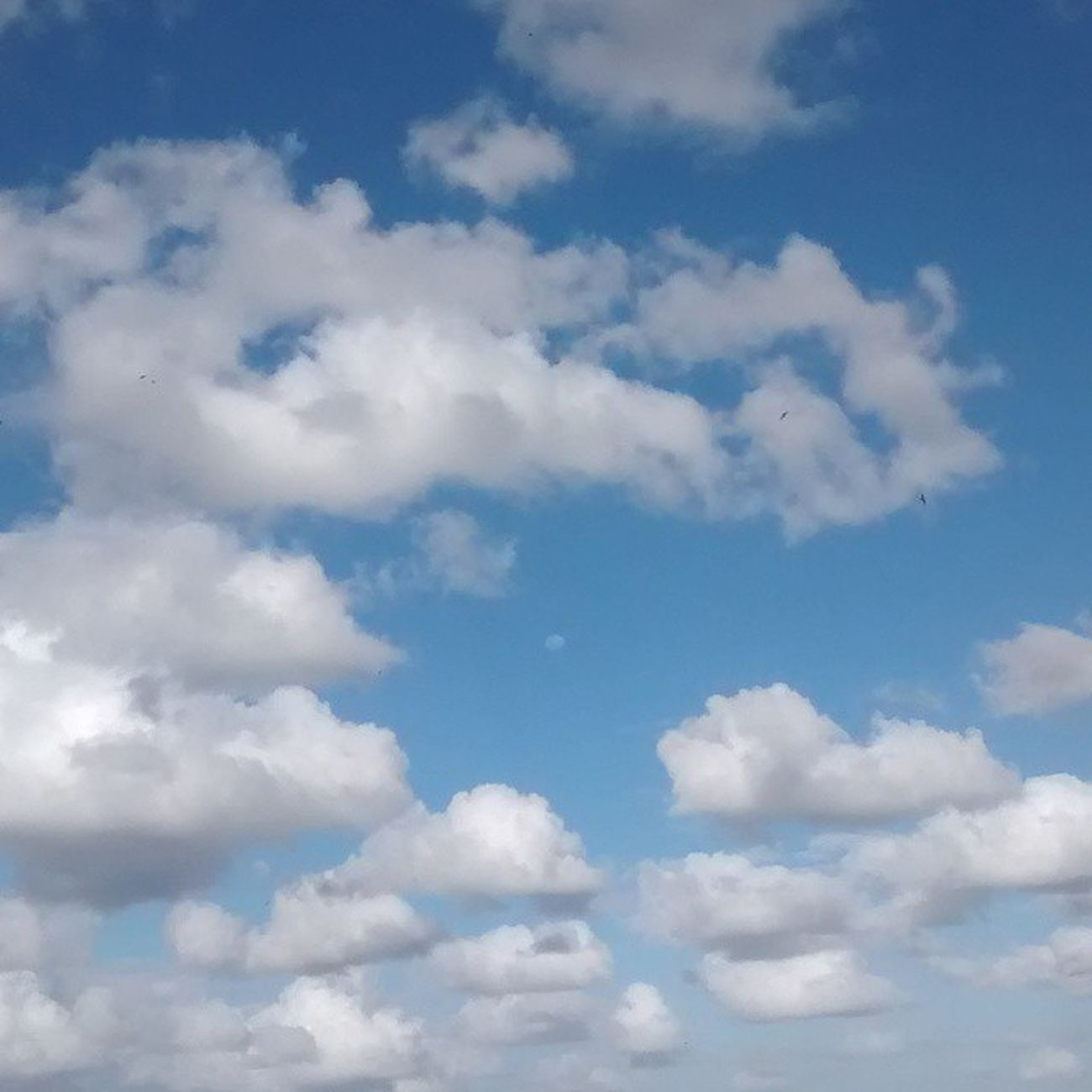 Céu lindo com a lua vindo ? Fotografandooceu Photography Instaphoto Motog