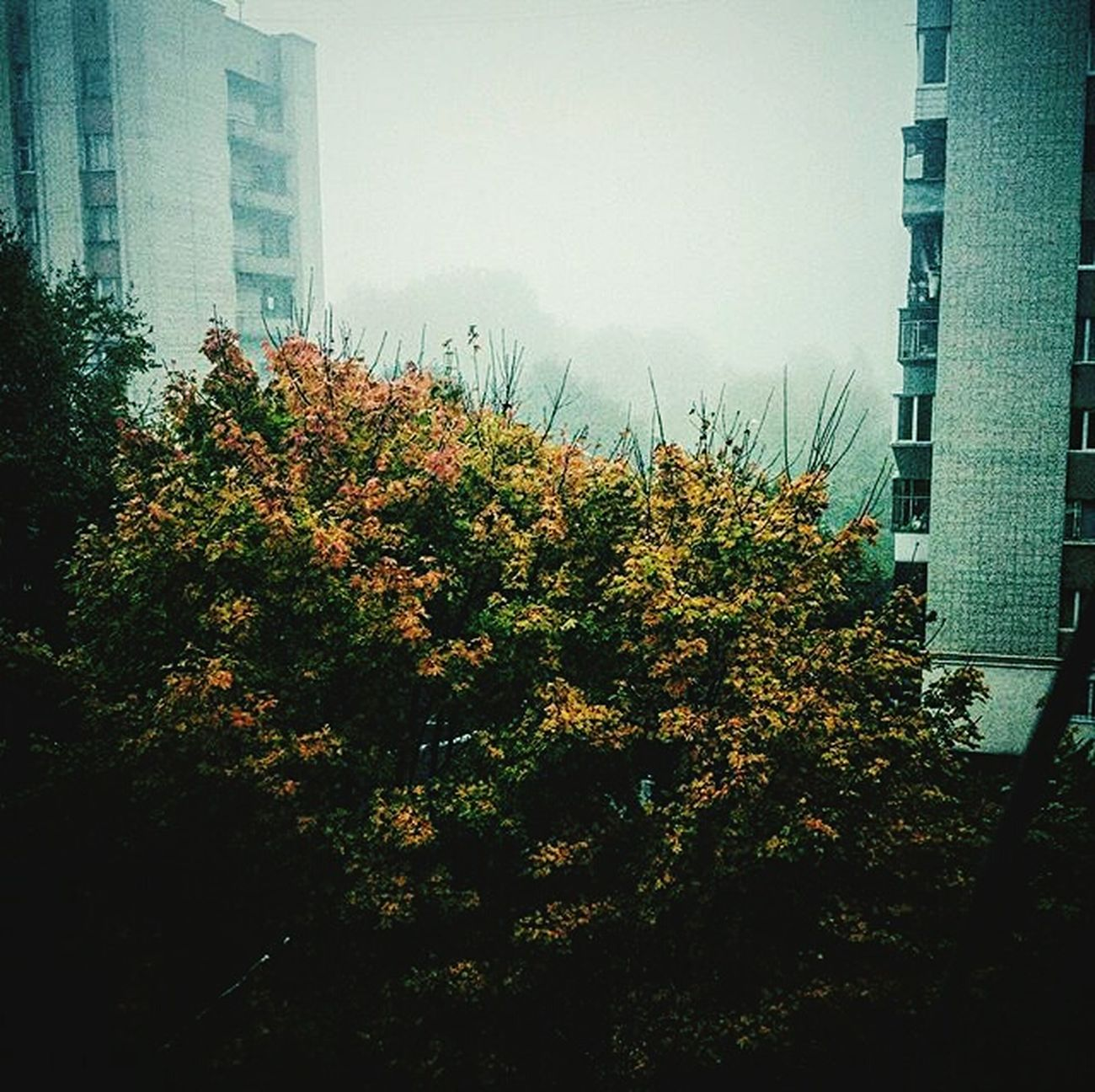 City Beauty In Nature Nature Outdoors Sky Day Autumn Colors Autumn🍁🍁🍁 Landscape VSCO Vscogram Vscogood Vscocam Lviv, Ukraine Lvivua Lvivit Lviv1256 Lvivgram Lvivforyou No People Tree Area Nature