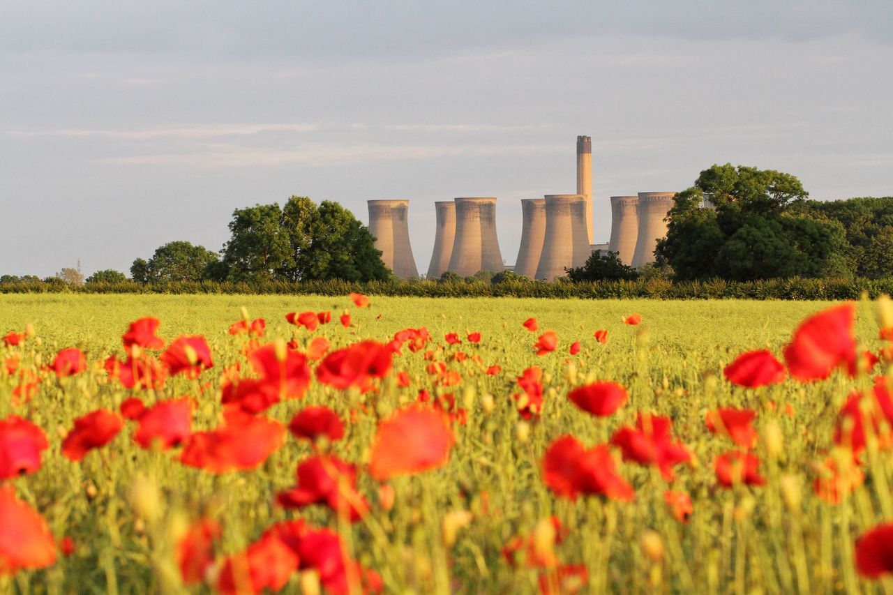 Eggborough Power Station near Selby behind a field full of poppies. Poppies  Poppy Fields Poppy Poppy Flower Poppy Flowers Power Station Eggborough Power Station Coal Coal Power Plant Electricity Production Electricity Station Contrast Industry Power Plant Nature Plant Industrial Landscapes Chimneys
