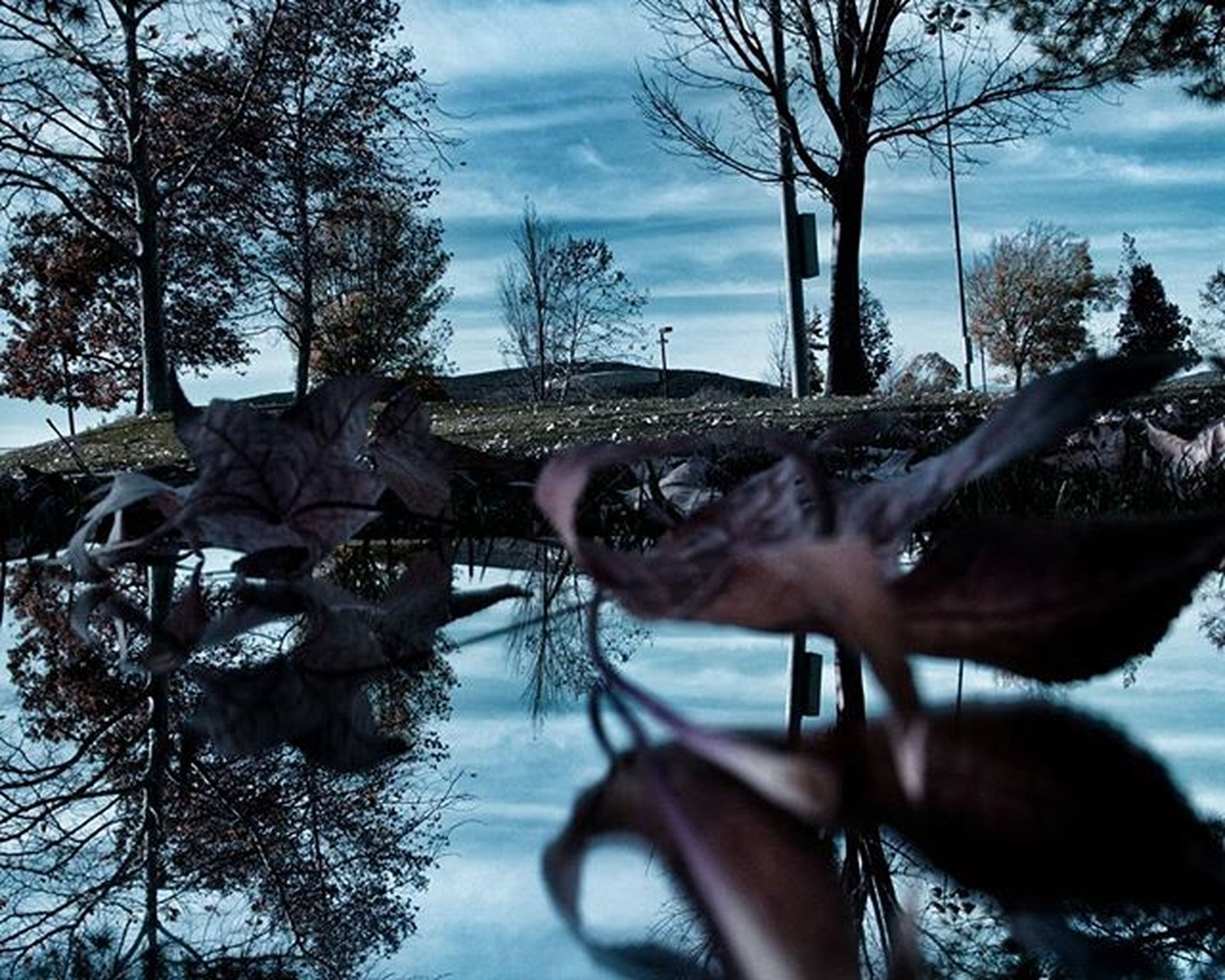 water, tree, sky, animal themes, bare tree, lake, cloud, nature, one animal, cloud - sky, river, day, mammal, branch, outdoors, swimming, rippled, tranquility, waterfront, reflection
