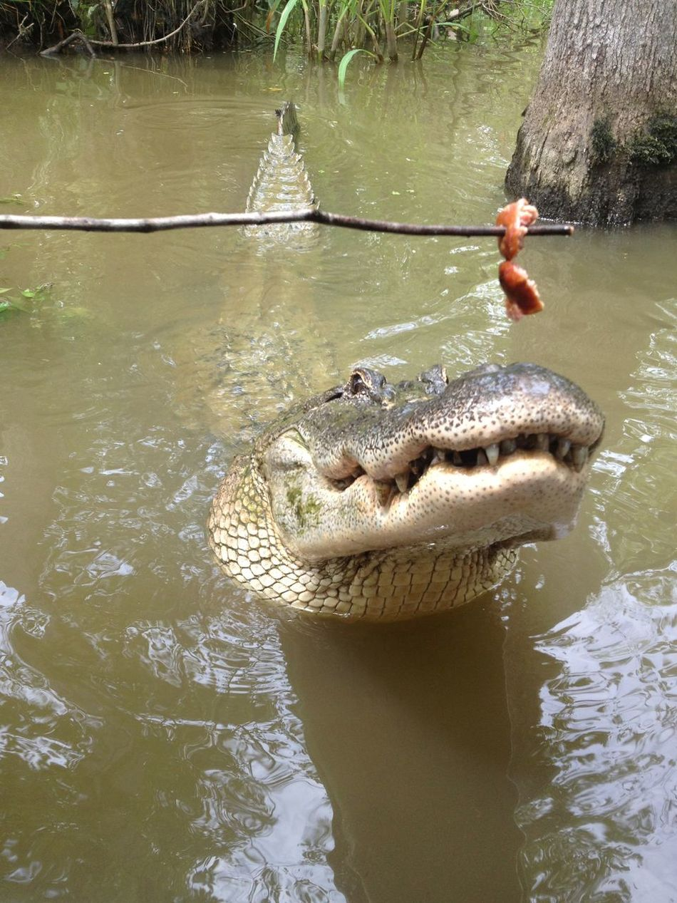 Checking out the Wildlife in bayou Nature Traveling Hello World Check This Out