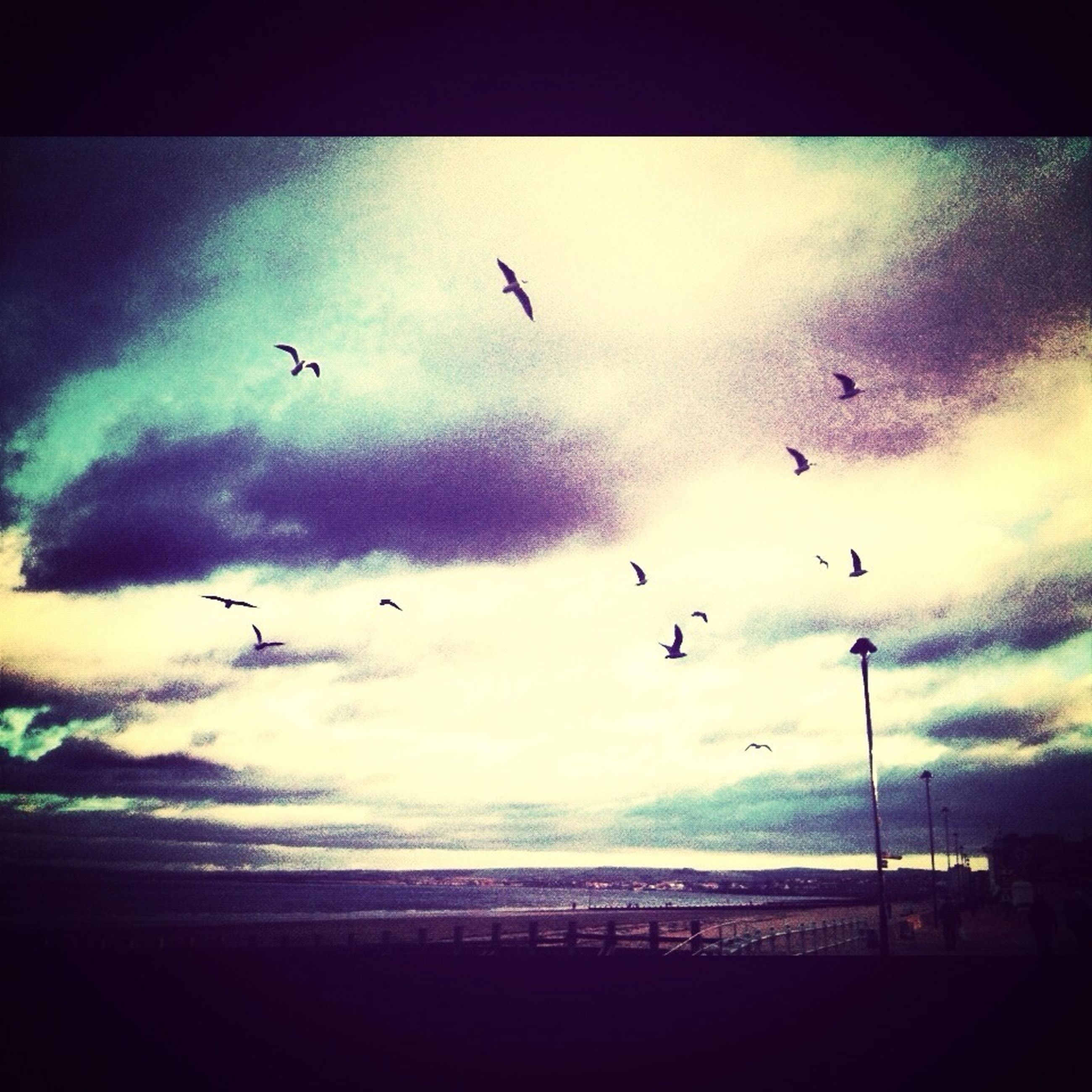 bird, flying, animal themes, wildlife, animals in the wild, sky, silhouette, transfer print, auto post production filter, sea, mid-air, scenics, nature, beauty in nature, cloud - sky, sunset, flock of birds, tranquility, water