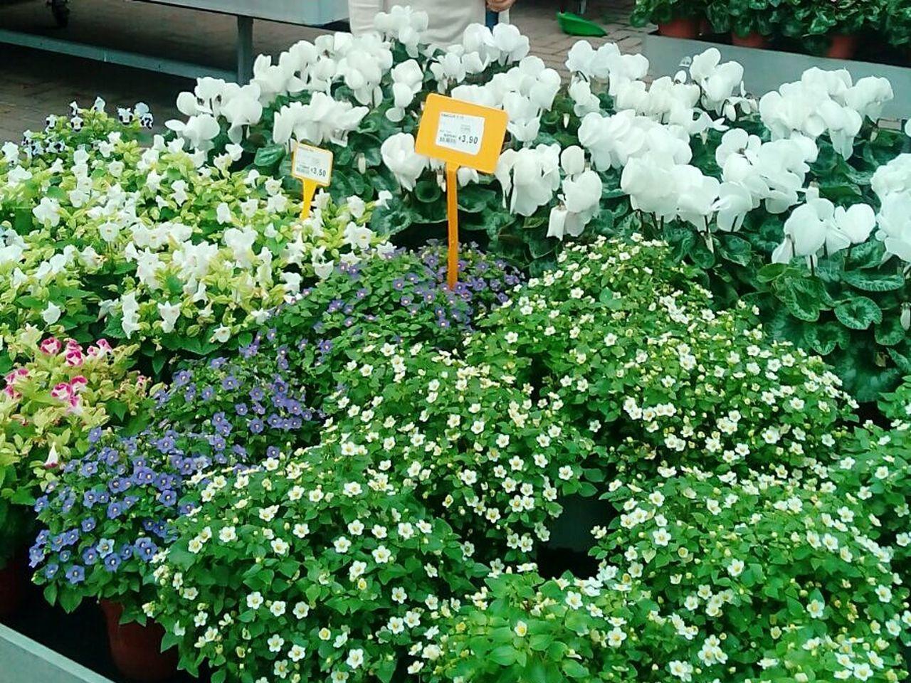 Flower Plant Florist Flower Shop Blossom Nature