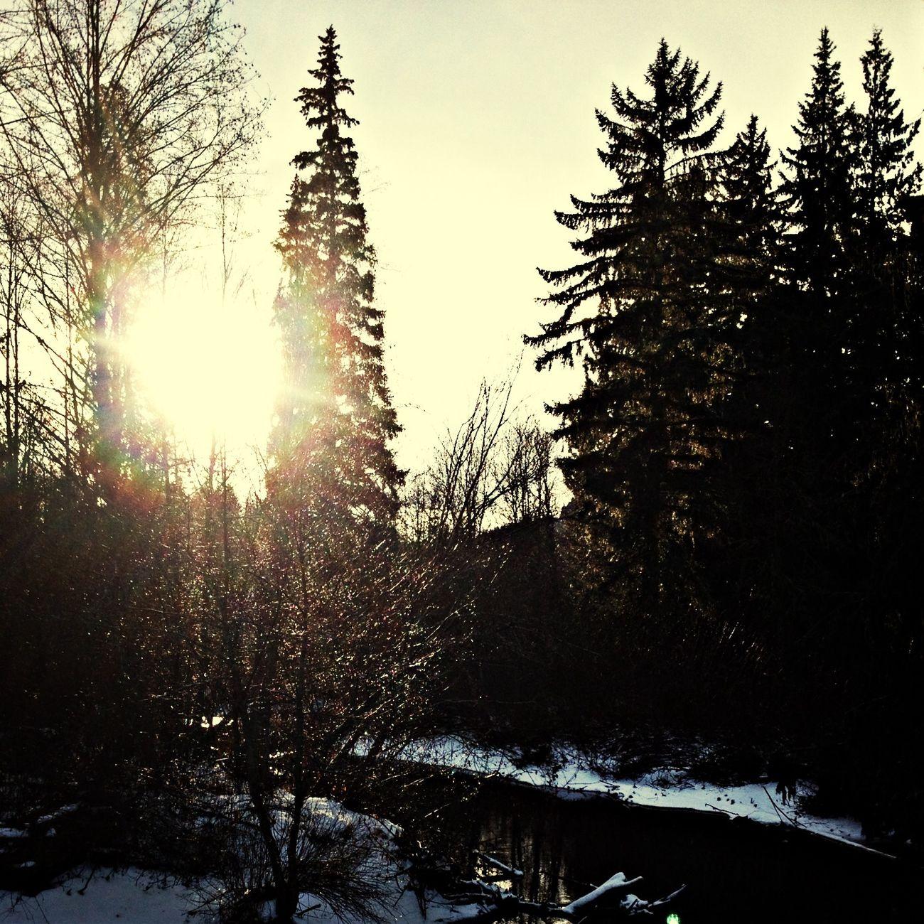 Bosque hermoso...