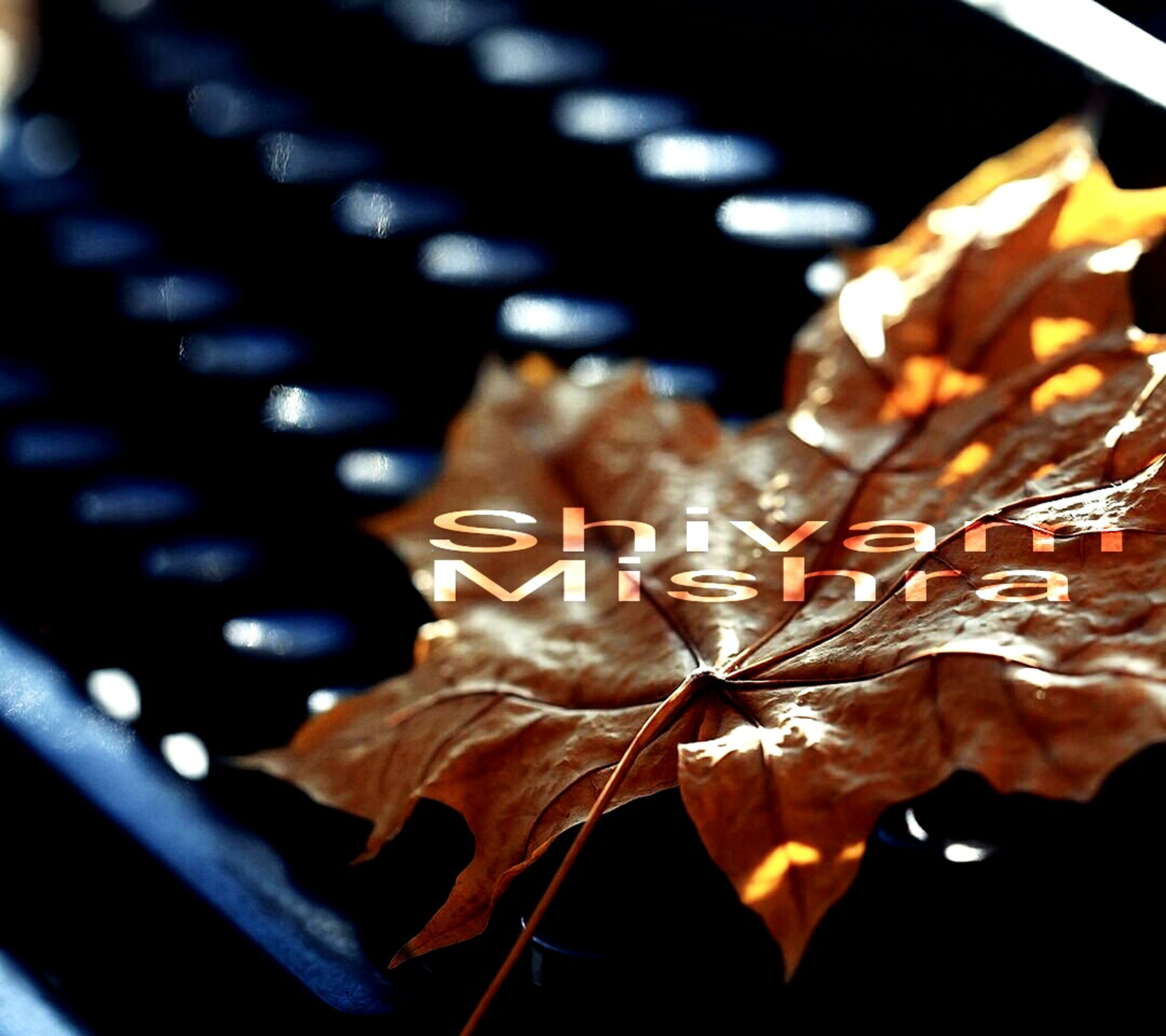 close-up, focus on foreground, selective focus, leaf, indoors, still life, large group of objects, abundance, dry, no people, metal, leaves, autumn, in a row, day, freshness, paper, detail, variation
