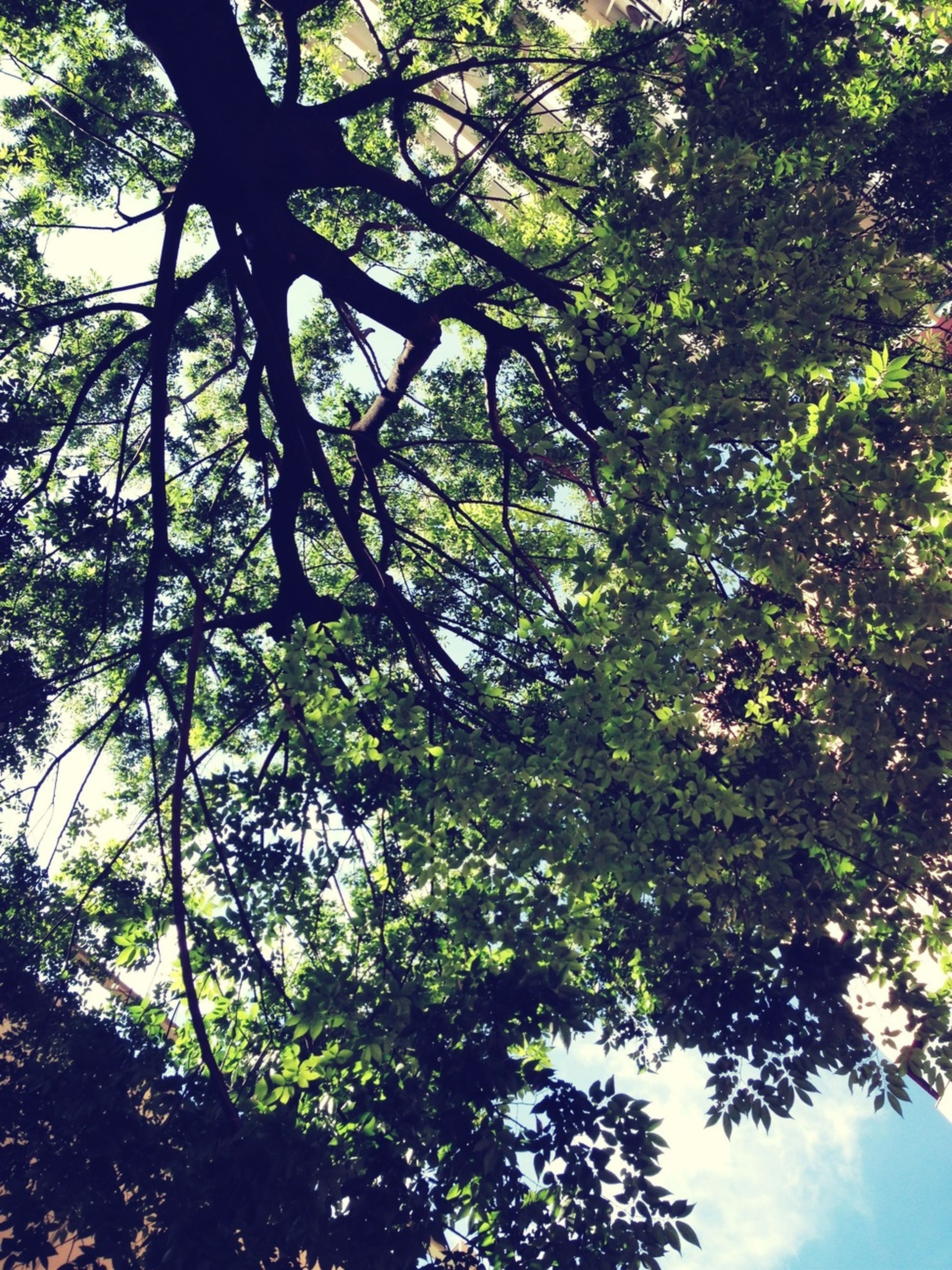 tree, low angle view, branch, growth, tranquility, nature, green color, beauty in nature, leaf, sky, tree trunk, day, no people, outdoors, forest, scenics, lush foliage, tranquil scene, sunlight, green