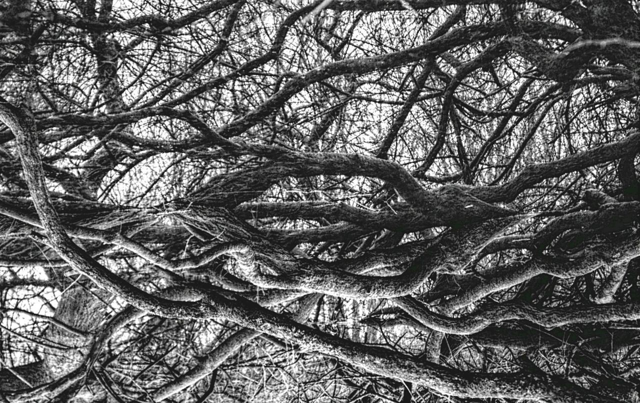 Roots Shades Of Grey Hdr Edit Nature Reflection Abstract SonyNEX5n