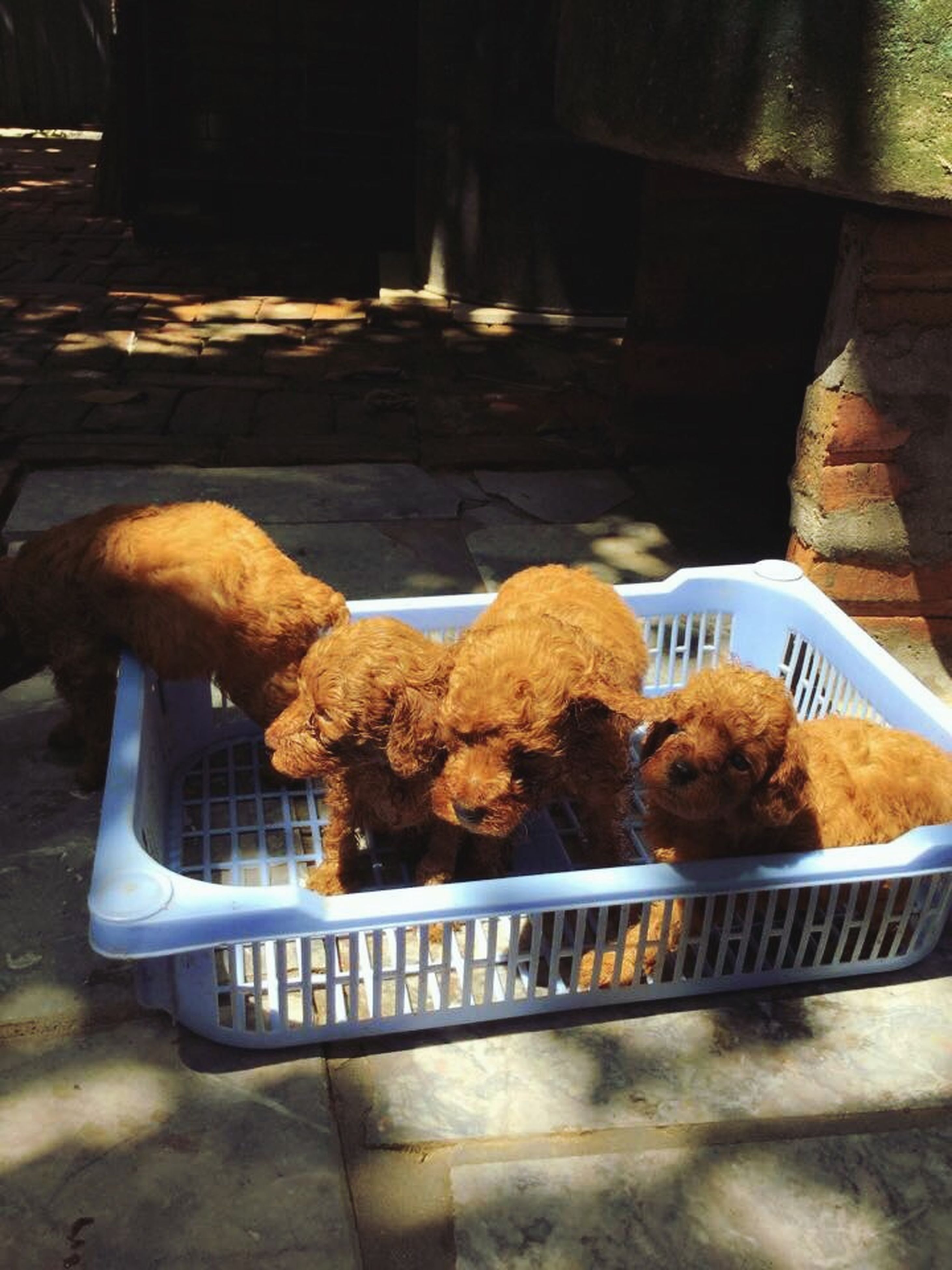 food and drink, food, indoors, freshness, meat, healthy eating, relaxation, sitting, day, table, dog, domestic animals, mammal, high angle view, no people, animal themes, bread, sunlight, pets